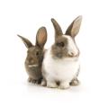 Kaninchen, Tierarztpraxis Dres. Bartusch und Oesterreich