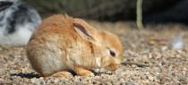 Kaninchen, Tierarztpraxis Bartusch und Oesterreich
