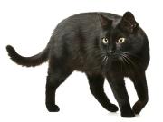 Katze,Tierarztpraxis Dres. Bartusch u. Oesterreich